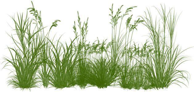 кисти Photoshop трава